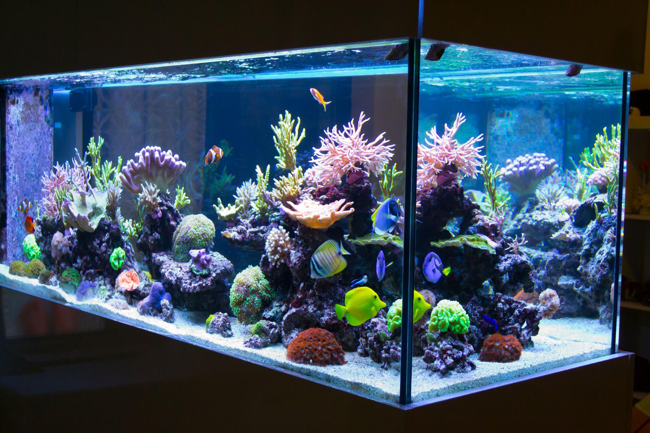 bubbles in aquarium