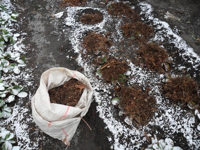 Укрытие клубники на зиму в Подмосковье