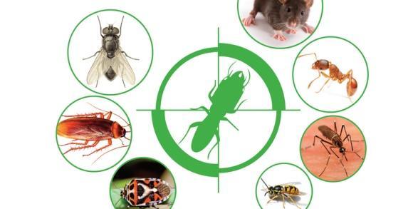 Diệt côn trùng tại nhà và một số sai lầm nghiêm trọng