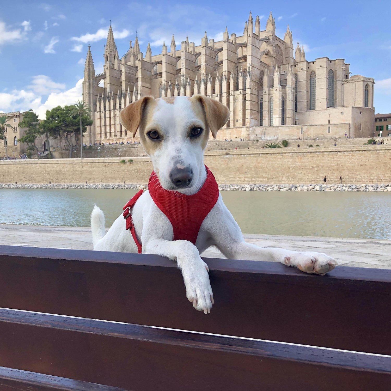 Palma de Mallorca con perro