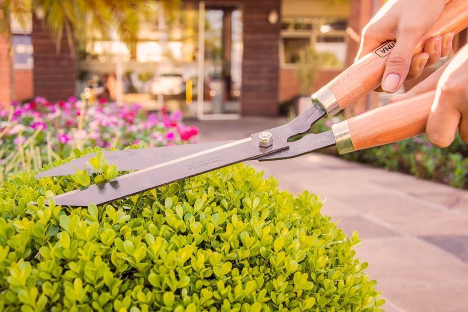 Pessoa cortando uma flor  Descrição gerada automaticamente com confiança média