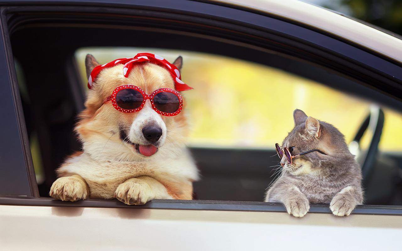 Безопасные путешествия с домашними животными - Картинка 1