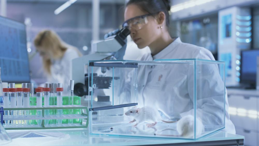 Células tumorais foram aplicadas em camundongos para teste. (Fonte: Shutterstock)