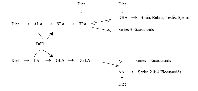 Omega 3 Pathways