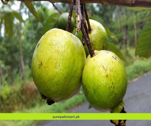 https://www.purepakistani.pk/wp-content/uploads/2018/11/guava-1.jpg