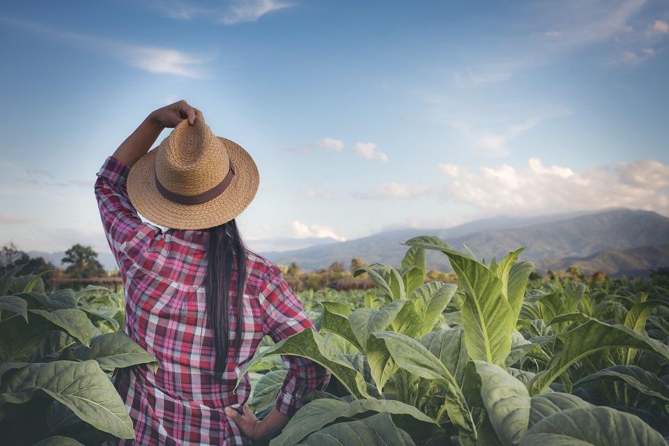 Agroindústria foi o setor menor afetado pela crise econômica.
