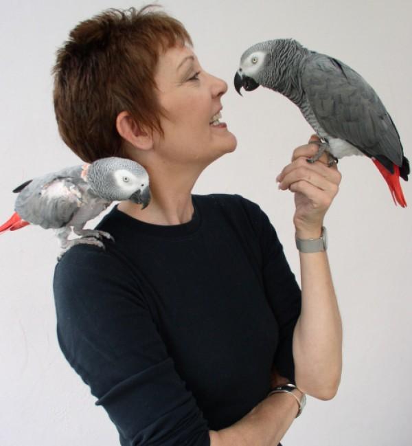 Попугаи любят внимание