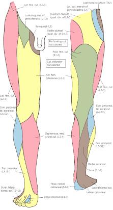 No nervo bloqueio pé do