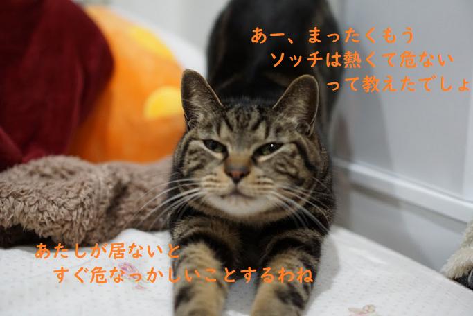 猫は子供(赤ちゃん)のお世話をしてくれる時がある?そのしつけ方とは?