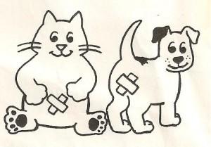 Phiếu đăng kí giảm giá 50% triệt sản mèo tại Chien Vet Clinic