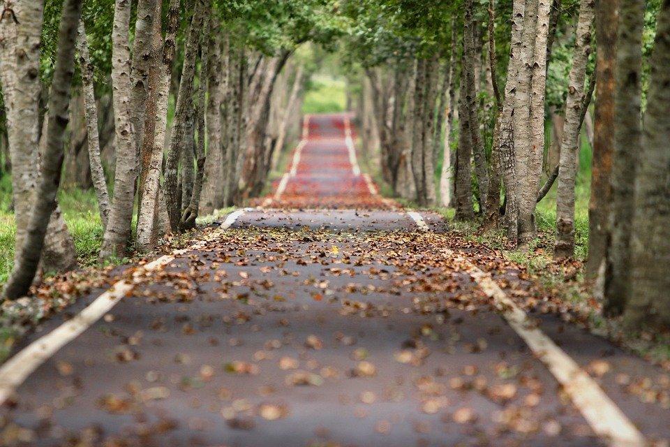 Bosque, Estrada, Folhas Caindo, Natural, Árvores, Beco
