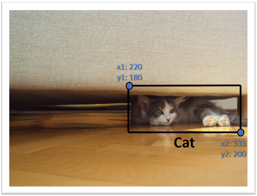 Cat Detected
