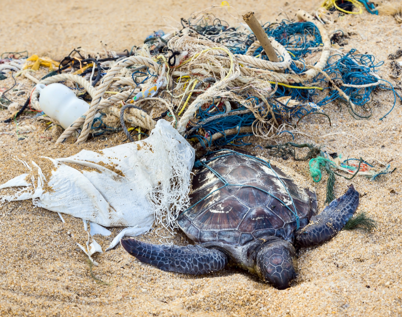 turtle stuck in plastic trash