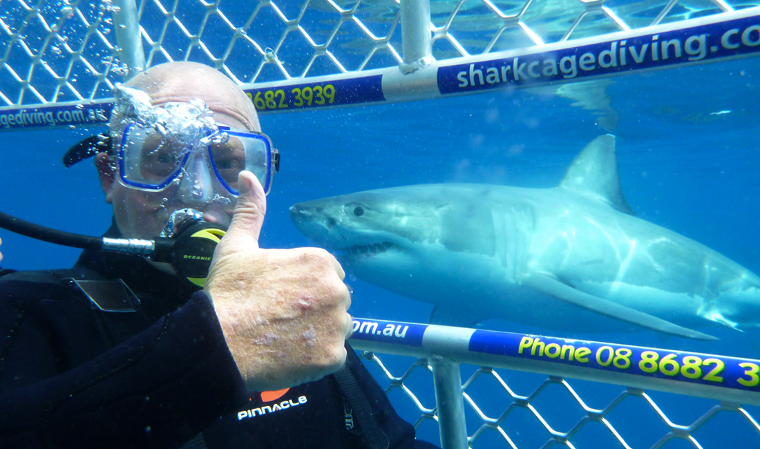 shark-cage-diving-big-3.jpg