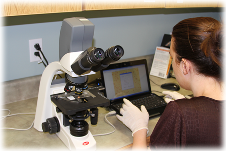 An employee using a compound microscope to analyze sprayer droplets
