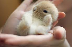 Image result for cute bunnies