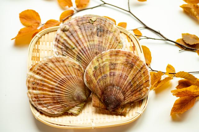 廃棄物から一転!飼料として使えるホタテ貝殻を徹底解説!
