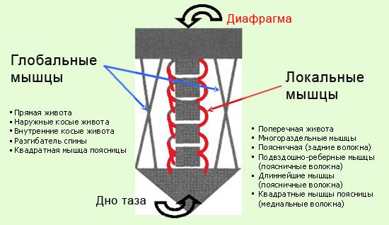 myshechnaya_stabilizaciya.jpg