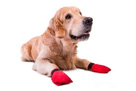Image result for dog booties