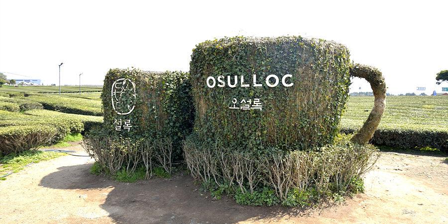 Image result for o'sulloc tea museum