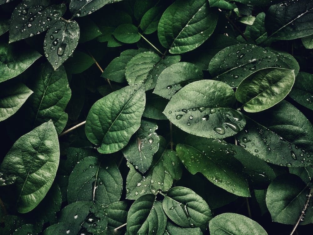 Close-Up Photography of Leaves With Droplets