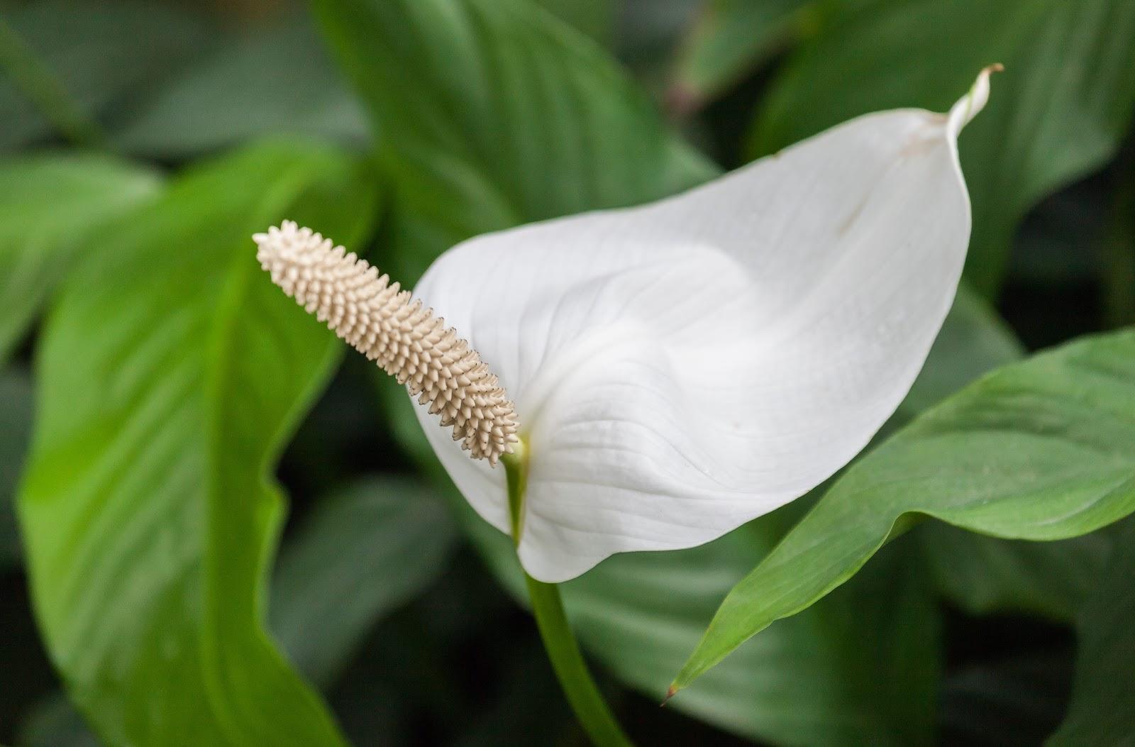 purificar-aire-plantas