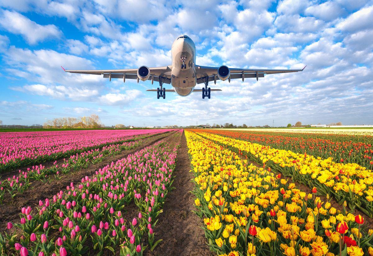 International flower delivery - Send fresh flowers abroad in minutes |  Interflora