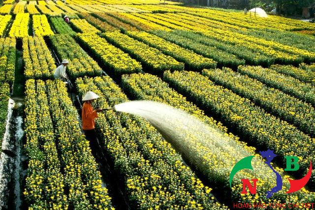 Thu hút nguồn vốn – Nông nghiệp công nghệ cao được cam kết cho vay 135.000 tỷ đồng