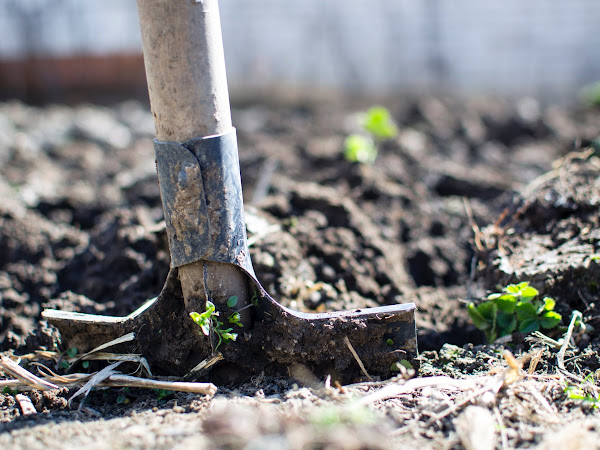 Getting Your Garden In Shape for Summer