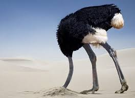 Image result for scared ostrich
