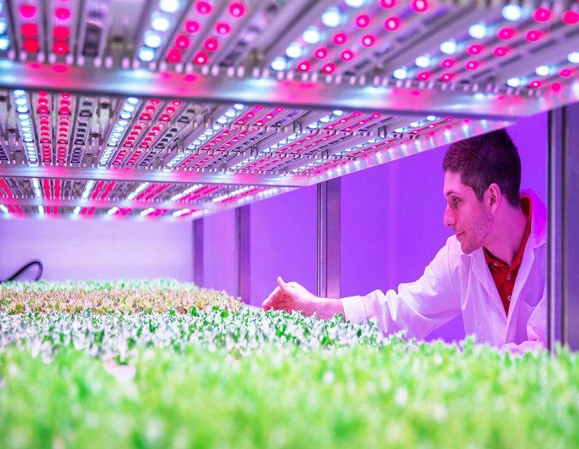 Đèn LED nông nghiệp giúp tăng chất lượng và phát triển cây trồng