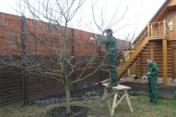 Для чего нужно обрезать обрезать плодовые деревья и кустарники на своём участке?