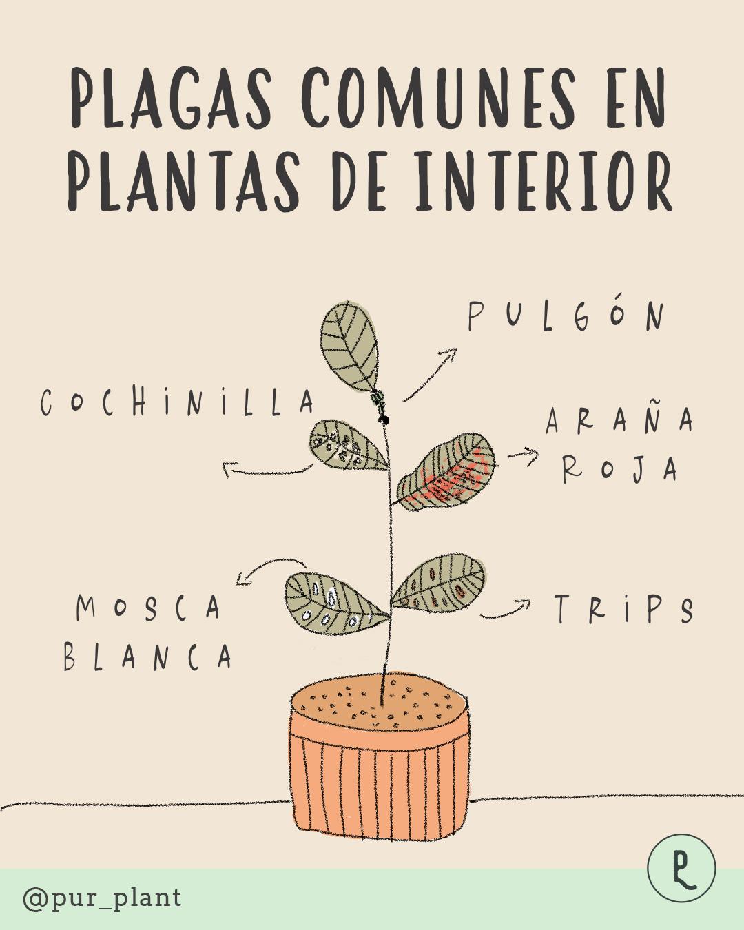 plagas plantas de interior