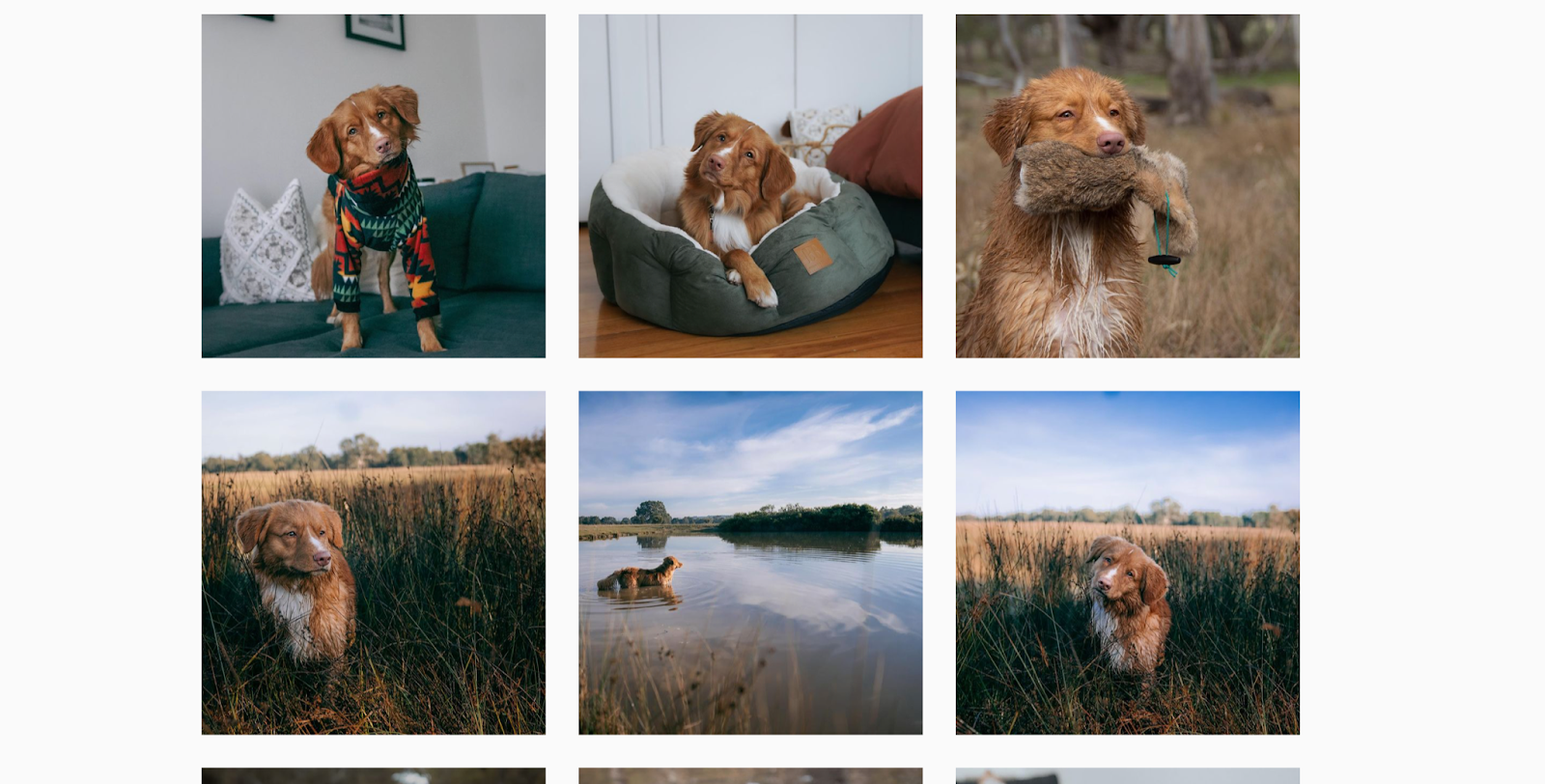 employ themes for dog photos