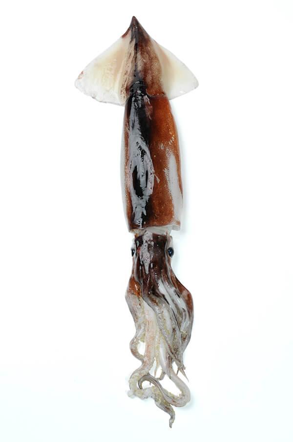 魷魚比起透抽、花枝,肉質更加緊實富嚼勁。
