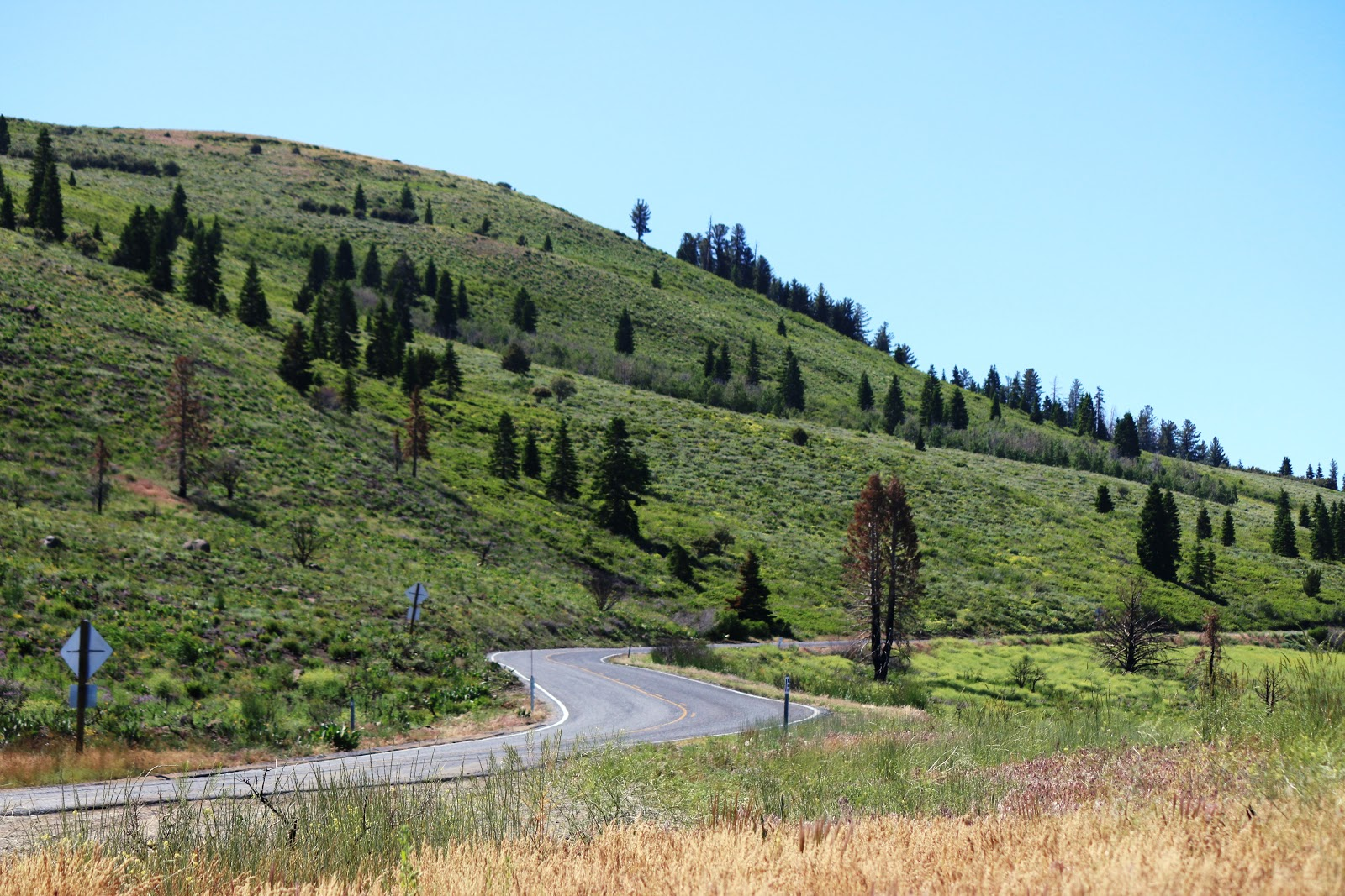 Bike ride up Monitor Pass East  - view of road and hillside