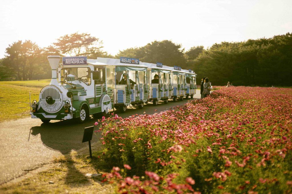 Seaside Park Train at Hitachi Seaside Park in Ibaraki