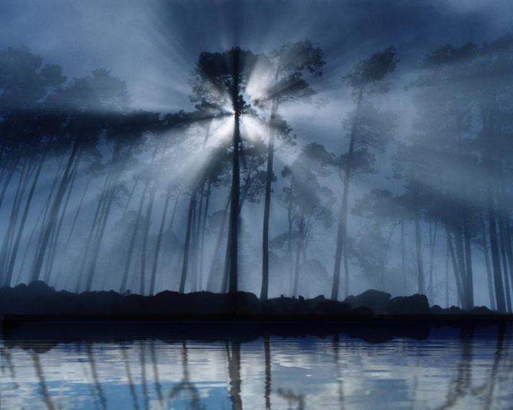 انتشار نور از میان درختان