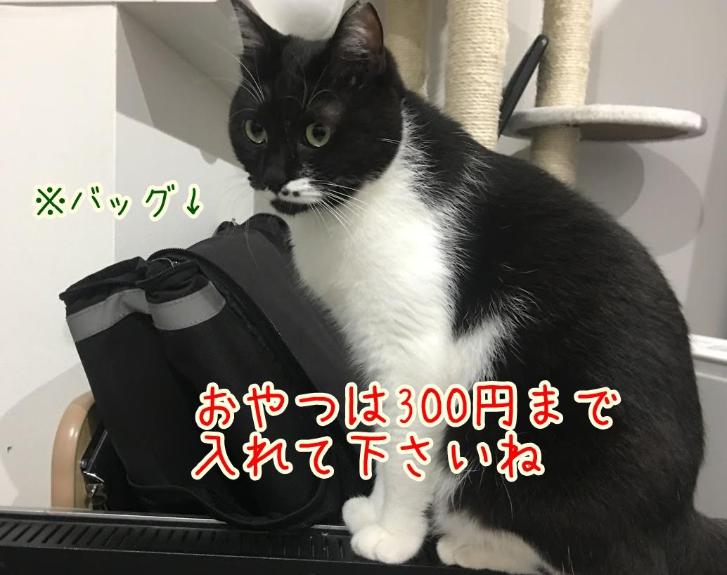 災害から愛猫を守るために!必要な防災グッズと飼い主さんが出来ること