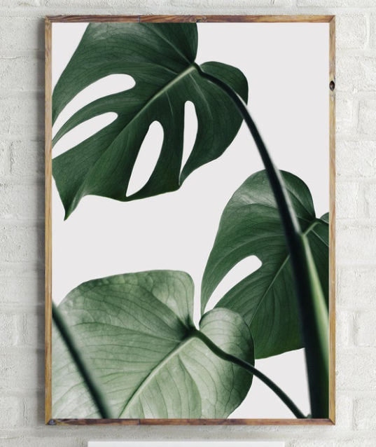Large green monsterra print in frame hanging on grey brick background