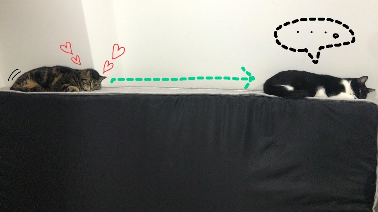 猫がトイレやお風呂についてくる理由~分離不安とは~