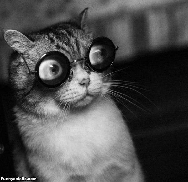 Crazy_Cat_Eyes537.jpg