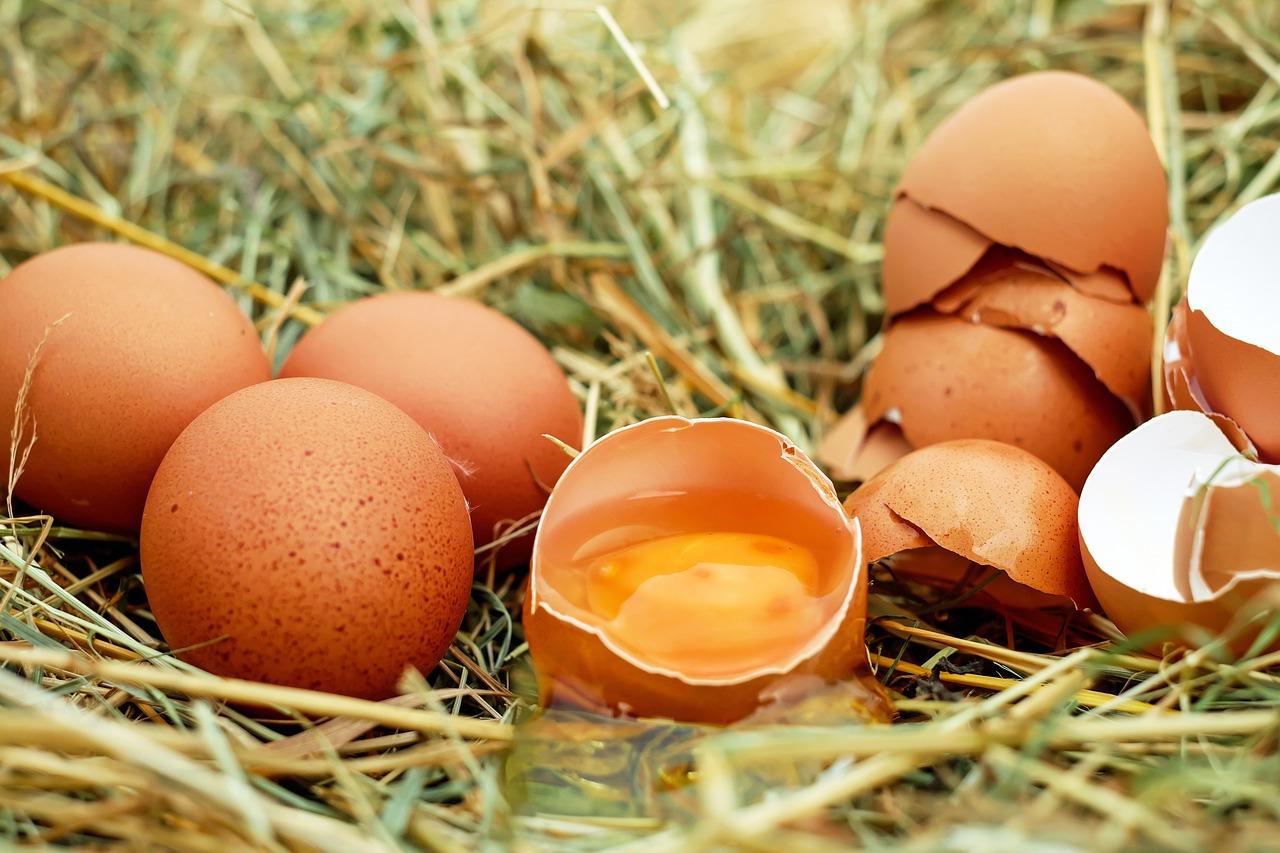 egg-1510449_1280.jpg