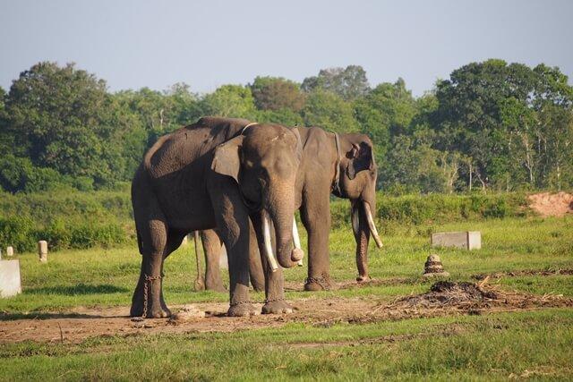 Kenalan Bersama Gajah di Taman Nasional Way Kambas, Yuk! | Pigijo Blog |  Trip on a WHIM