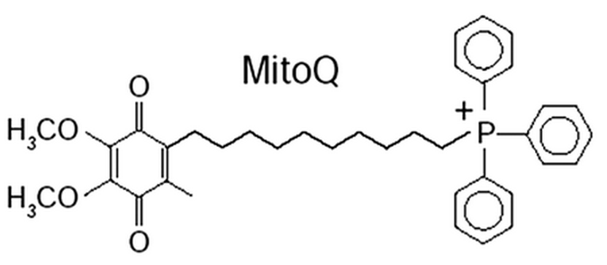 MitoQ = Targeted CoQ10