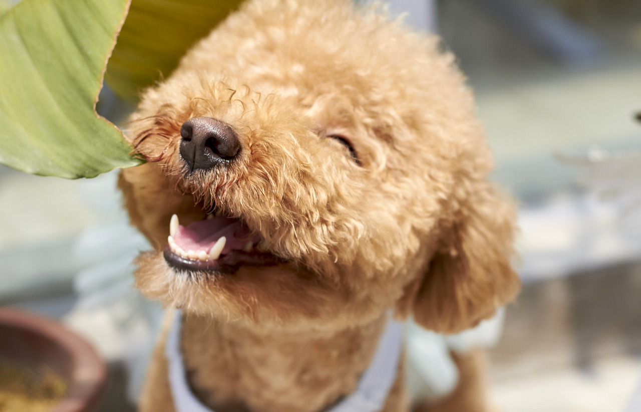 How Does Your Dog Love You? 5 Ways that Dogs Show Their Love