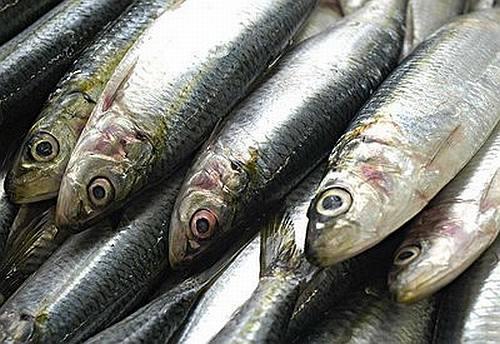 Resultado de imagem para foto sardinha