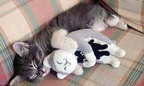 ผลการค้นหารูปภาพสำหรับ แมวเล่นตุ๊กตา