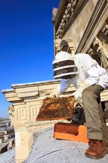 Общество пчеловодов Швеции