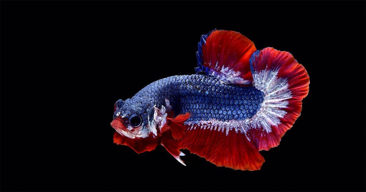 7. ปลา